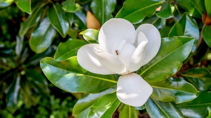 Bunga Apa yang Bikin Hoki? Ini Penjelasannya Menurut Feng Shui