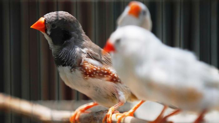 Berikut Harga Burung Terkini Di Yogyakarta Tribun Jogja