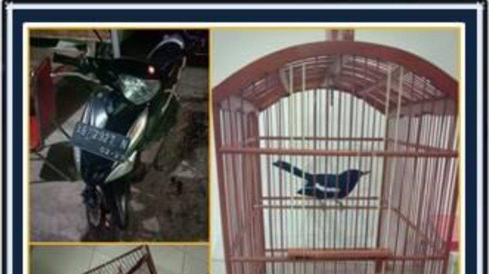 Curi Burung Tetangga Seharga Rp 3 Juta, Pemuda di Sleman Meringkuk di Tahanan