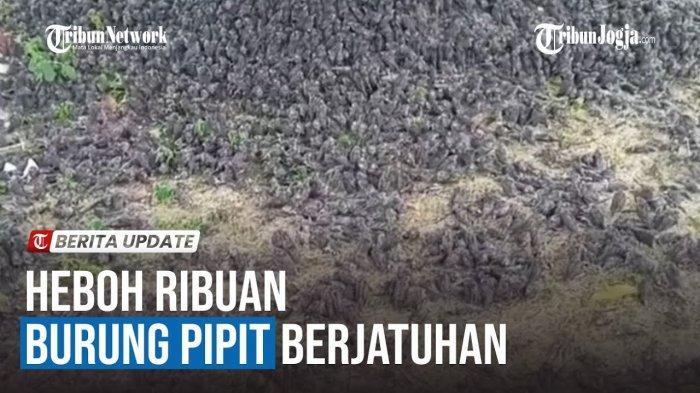 Burung Pipit Mati Massal Usai Diguyur Hujan di Cirebon