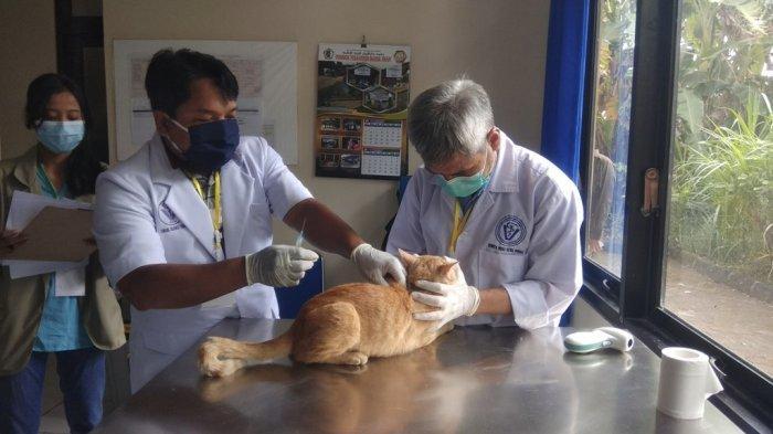 Hewan Peliharaan Dapat Vaksin Gratis, Pemkab Sleman Peringati Hari Rabies Sedunia