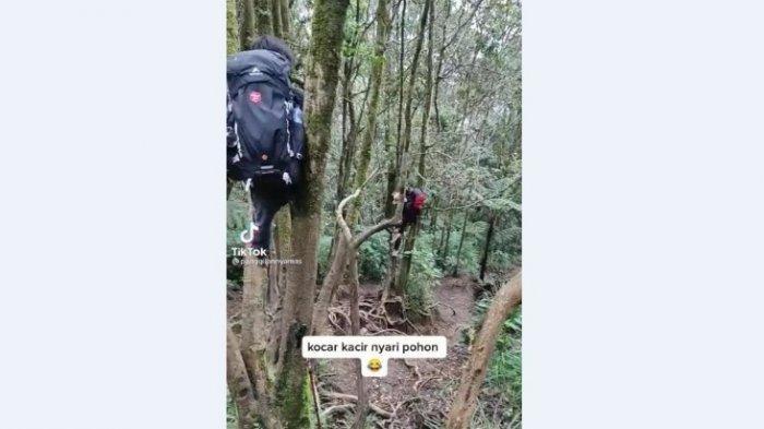 Cerita Lucu Pendaki Gunung Cikuray Lari Tunggang Langgang Dikejar Babi Hutan, Akhirnya Panjat Pohon