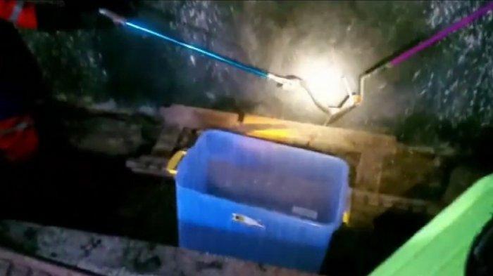 Damkar Klaten Kembali Evakuasi Ular Kobra di Pemukiman Warga, Petugas Butuh Waktu Satu Jam
