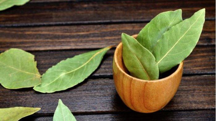 Daun Salam, Obat Herbal Jika Asam Urat Naik dan Cara Membuatnya
