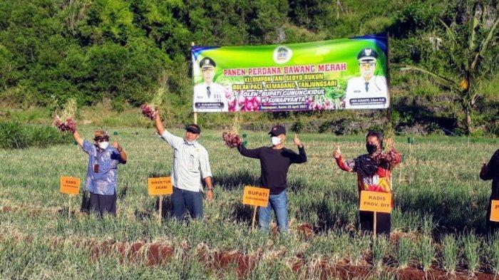 DPP Gunungkidul Sebut Budidaya Holtikultura Berkembang hingga Kawasan Pantai