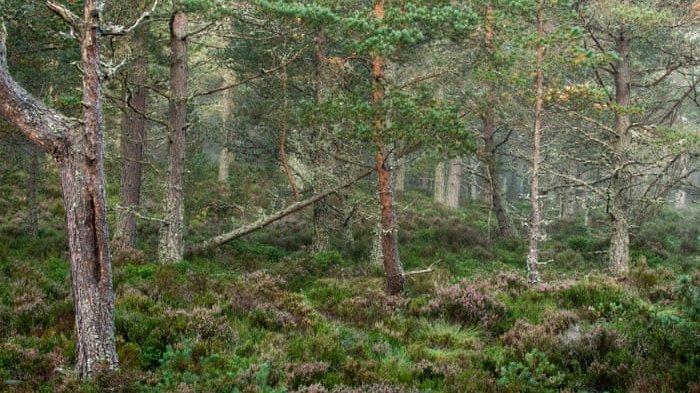 Gadis Ditemukan Terkapar di Tengah Hutan Pinus Diduga Korban Tindakan Asusila