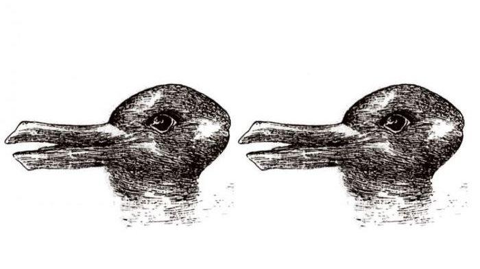 Perdebatan Ini Gambar Kelinci atau Bebek Berakhir Sudah!