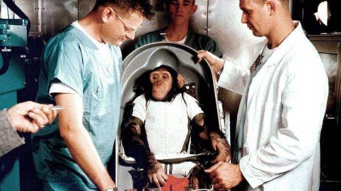 Kisah Ham, Simpanse yang Jadi Astronot Sebelum Neil Armstrong dan Buzz Aldrin