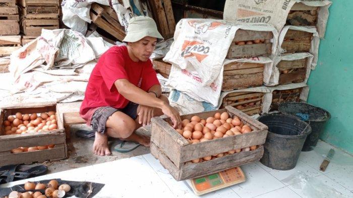 Harga Pakan Tinggi, Peternak Ayam di Kulon Progo Pilih Jual Ayam Petelurnya