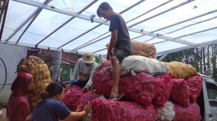 Berdayakan Petani di Desanya, Warga Magelang Sukses Pasarkan Ubi Jalar Hingga Ke Luar Negeri