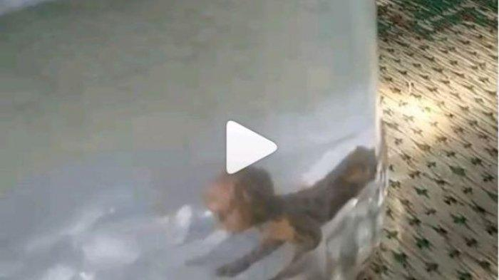 Viral Video di Medsos Warga Ngaku Menangkap Tuyul di Wonosari Gunungkidul