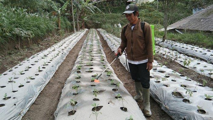 Hujan Abu Guyur Desa di Lereng Merapi Klaten, Aktivitas Warga Terpantau Normal