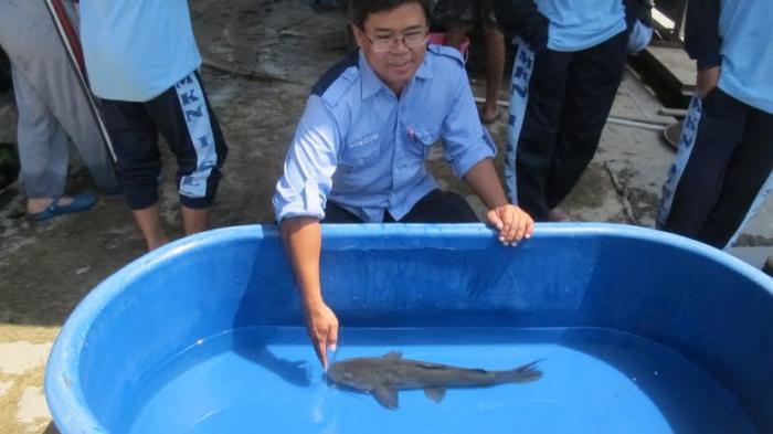Mangut Beong, Ikan Asli Sungai Progo yang Nyaris Punah