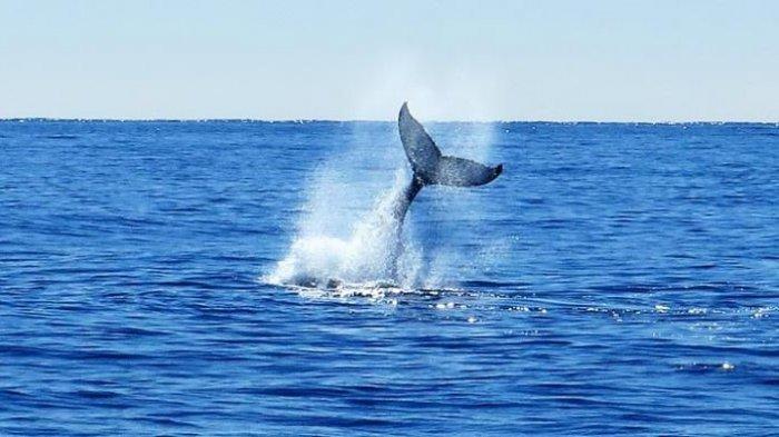 Arti Mimpi Menangkap Ikan Besar, Berbahagialah Konon Anda Akan Sukses Besar