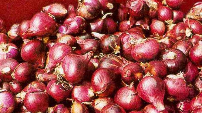 Sebanyak 600 Kilogram Bawang Merah Siap Panen di Klaten Raib Digondol Maling