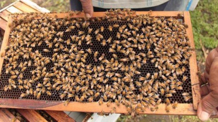 Lebah Ternyata Hewan yang Cerdas, Ini Buktinya