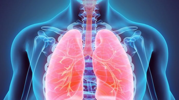 Daftar Herbal yang Berguna Bagi Paru-paru, Bisa Bantu Melegakan Napas Secara Alami