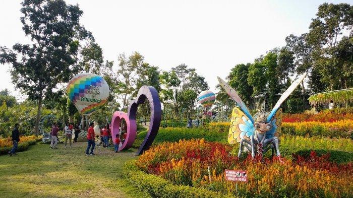 Indahnya Warna Warni Bunga Di Alamanda Jogja Flower Garden Turi Tribun Jogja