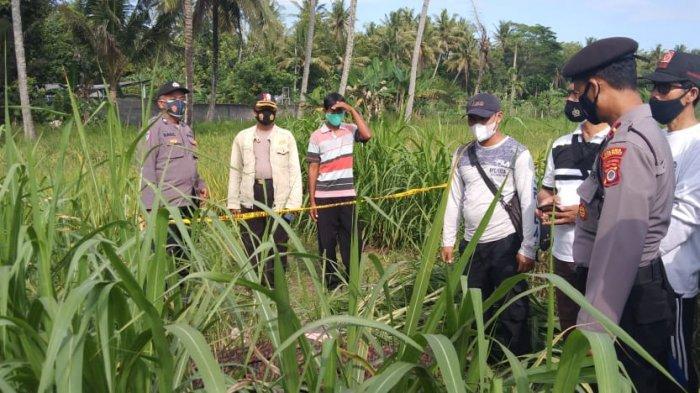 Tersengat Listrik, Jasad Petani di Kulon Progo Ditemukan di Bulak Persawahan Karang Patihan Sentolo