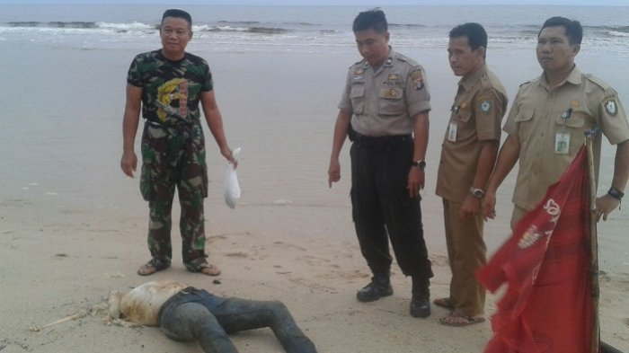 Geger! Mayat Pria Tanpa Kepala Ditemukan di Pantai Ujung Pandaran. Ini Kronologinya
