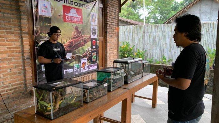 Sosialisasikan Keragaman Flora Fauna, Pecinta Reptil Gelar Jogja Hobbies Exhibiton