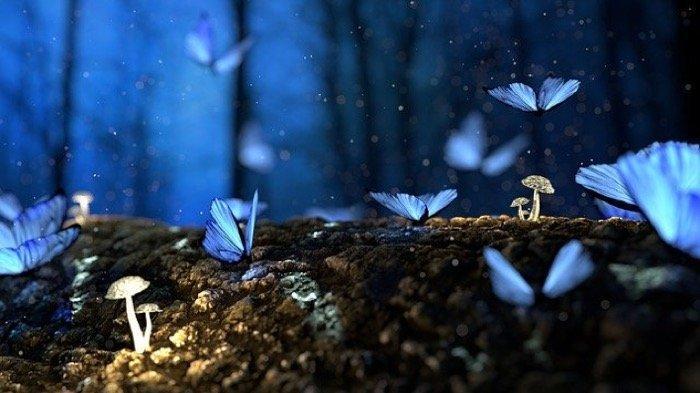 Kumpulan Arti Mimpi Tentang Kupu-kupu yang Jadi Pertanda Baik Hingga Buruk