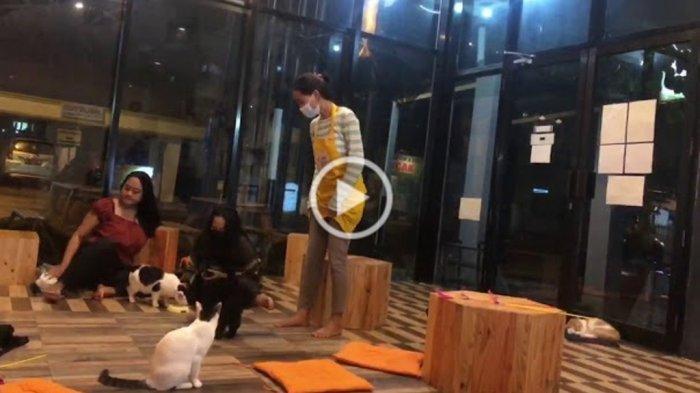 Nongkrong di Kafe Sambil Main dengan Kucing di Neko Kepo