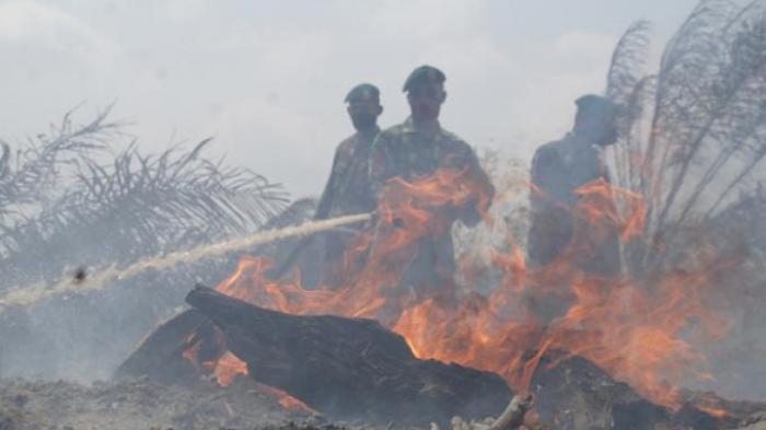 Dunia Kehilangan Hutan Hampir Seluas Pulau Jawa Setiap Tahunnya