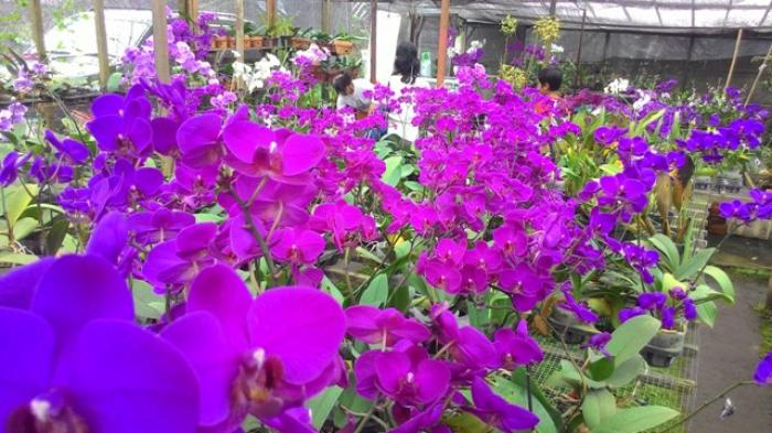Kebun Anggrek Jogja