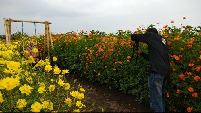 Satu Minggu Dibuka, Kebun Bunga Resoinangun Dibanjiri Pengunjung
