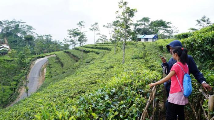 Kulonprogo akan Kembangkan Kawasan Perdesaan Agrowisata Menoreh Terpadu