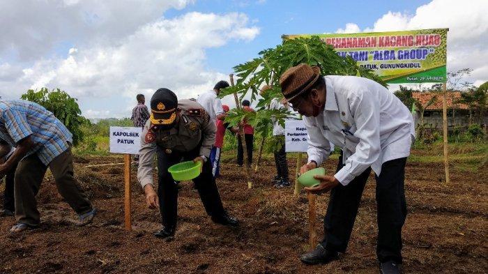 Tanam Kacang Hijau di Musim Kemarau, DPP Gunungkidul Optimis Hasil Optimal