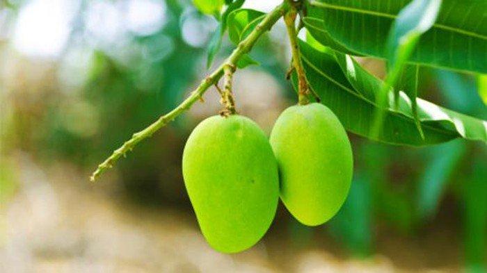 Jenis Buah-buahan yang Harus Dihindari Penderita Diabetes