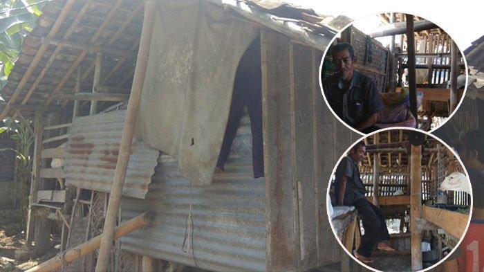 Kisah Pilu Warga Bantul yang Tinggal Satu Atap Bersama Empat Kambing, Sebatang Kara