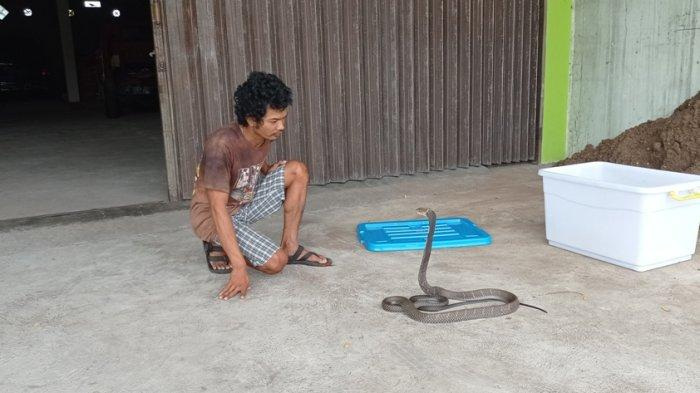 Kisah Pria Hobi Pelihara Reptil Bantu Tetangga Evakuasi Ular Masuk Rumah di Kulon Progo