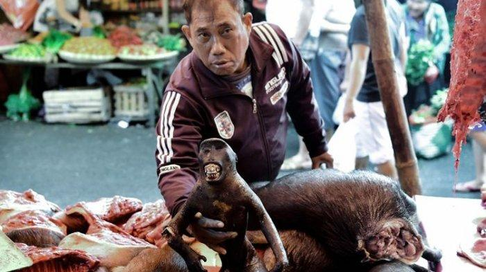 Ada Wabah Virus Corona, Koalisi Dog Meat Free Surati Jokowi Imbau Pasar Hewan Tomohon Ditutup