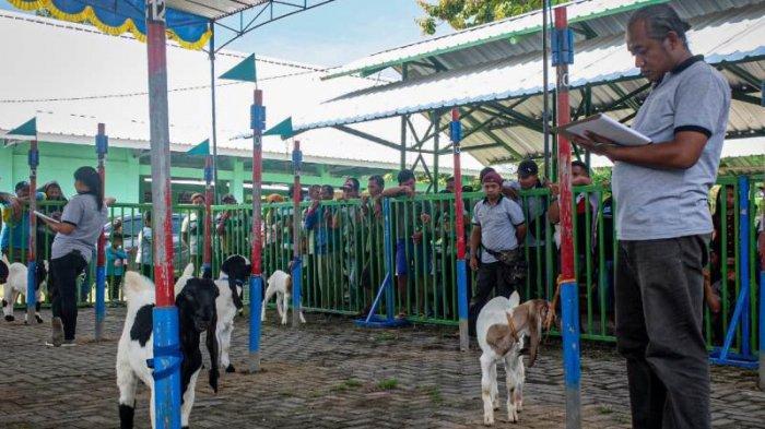 Kontes Kambing Etawa, Sarana Promosi Potensi Peternakan Kulon Progo