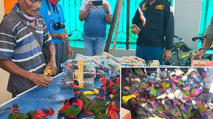 Tim Gabungan Polisi Laut (KP3) Fakfak, Konservasi Sumber Daya Alam (BKSDA) dan Penjaga Pantai Indonesia memperlihatkan puluhan burung beo yang dimasukkan ke dalam botol air plastik yang ditemukan di kapal yang merapat di Fakfak Papua