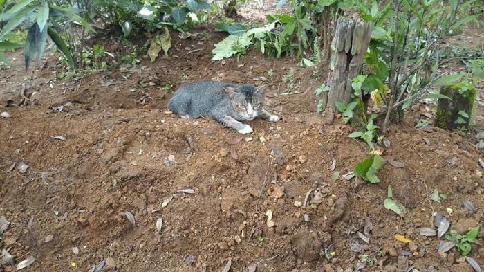 Wowwww, Mengharukan! Kucing di Kebumen Ini Setia Tunggui Kubur majikannya