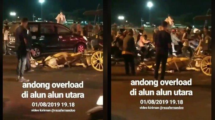 Viral Video Kuda Penarik Andong Jatuh Saat Angkut Penumpang di Alun-alun Utara Yogyakarta