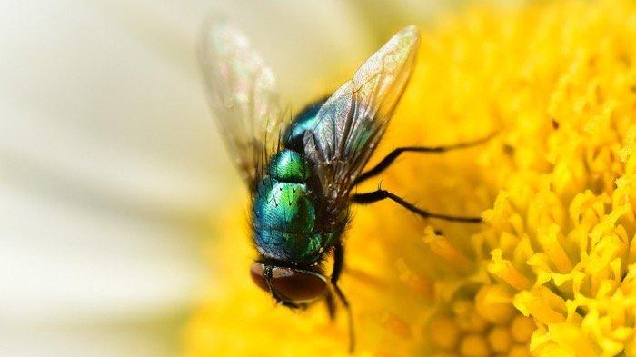 5 Arti Mimpi Melihat dan Memukul Lalat : Ada Rintangan Kecil yang Mengganggu Anda