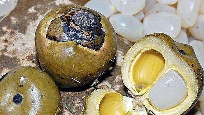 Kolang kaling adalah biji pohon aren atau enau (Arengan Pinnata) yang berbentuk pipih dan bergetah.