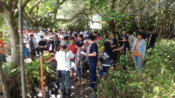 Peradah DIY Gelar Bakti Sosial Tanam Mangrove