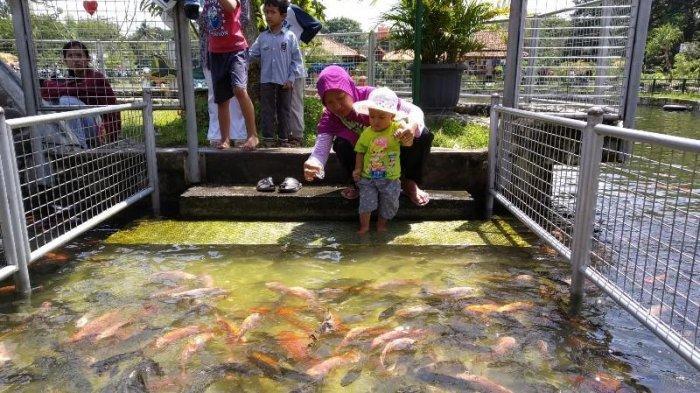 Kolam ikan yang ada di Kampung Flory