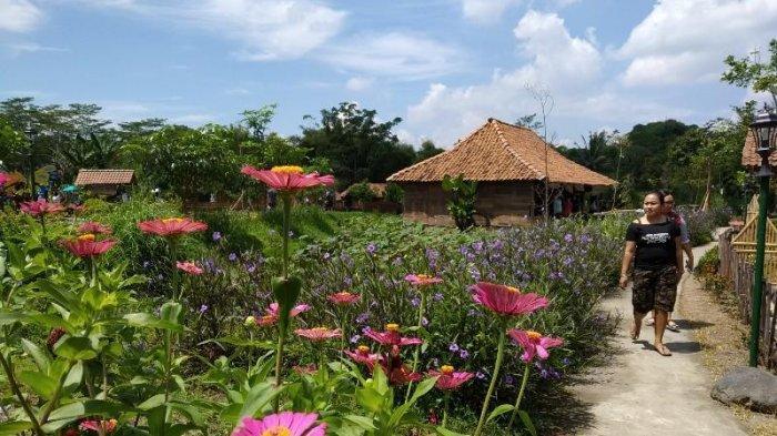 Dongkrak Perekonomian, DPKP DI Yogyakarta Kembangkan Desa Agrowisata