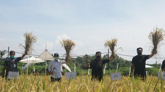 Menteri Pertanian RI Kunjungi Agrowisata Svargabumi Borobudur Magelang