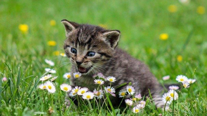 APA Arti Mimpi Digigit Kucing? Wah, Anda Mungkin Akan Patah Hati Diputus Pacar!