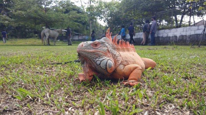 Pengelola Jogja Zoo Exotariu Mengaku Sudah Megap-Megap