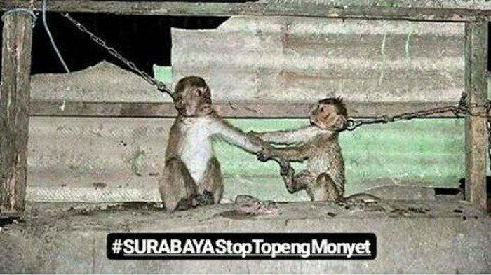Foto Dua Monyet Bergandengan Ini Mendadak Viral, Ternyata Ada Kisah Sedih Dibaliknya