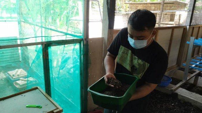 Nanda Raup Rp 2 Juta Perbulan dari Budidaya Maggot